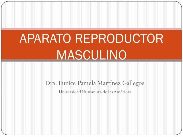 APARATO REPRODUCTOR MASCULINO Dra. Eunice Pamela Martínez Gallegos Universidad Humanista de las Américas