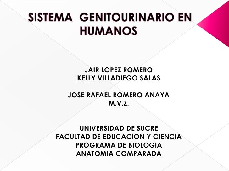 SISTEMA  GENITOURINARIO EN HUMANOS<br />JAIR LOPEZ ROMERO<br />KELLY VILLADIEGO SALAS<br />JOSE RAFAEL ROMERO ANAYA<br />M...