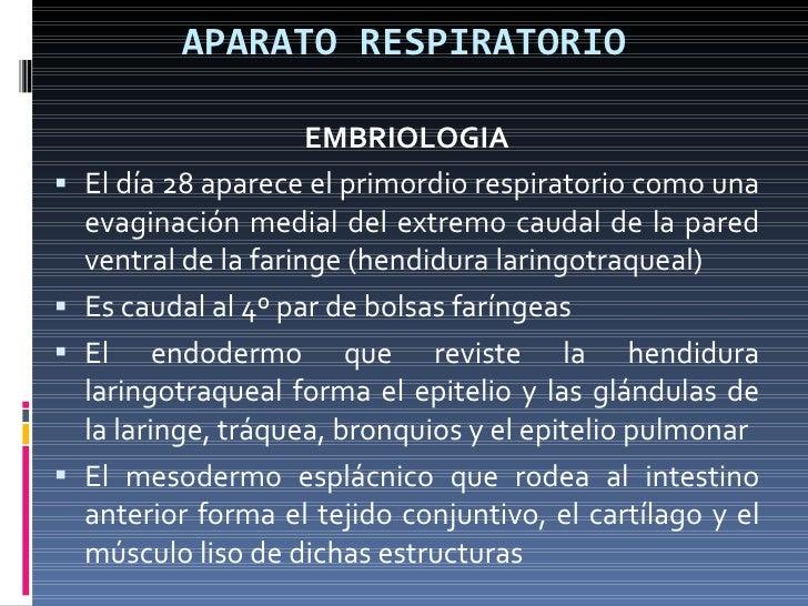 APARATO RESPIRATORIO <ul><li>EMBRIOLOGIA </li></ul><ul><li>El día 28 aparece el primordio respiratorio como una evaginació...