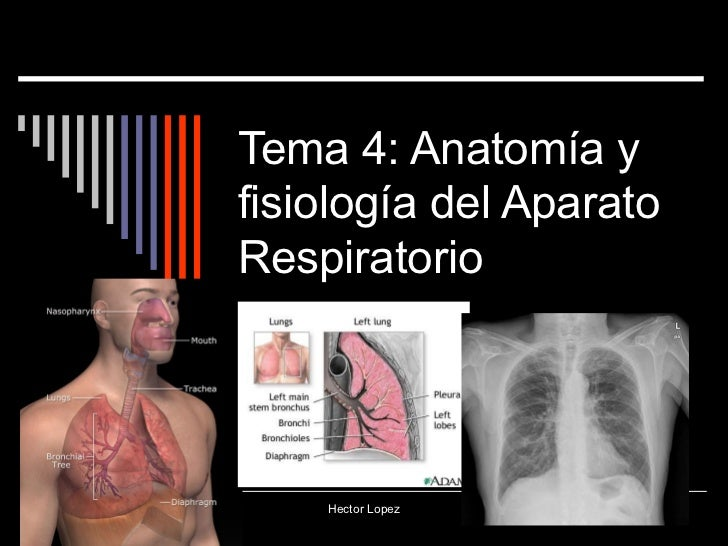 Tema 4: Anatomía yfisiología del AparatoRespiratorio    Hector Lopez