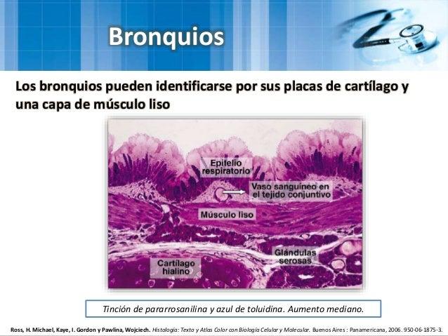 Histologia ross pawlina 6ta Edicion Descargar gratis
