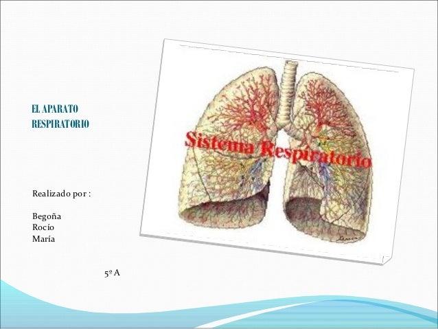 EL APARATORESPIRATORIORealizado por :BegoñaRocíoMaría                  5º A