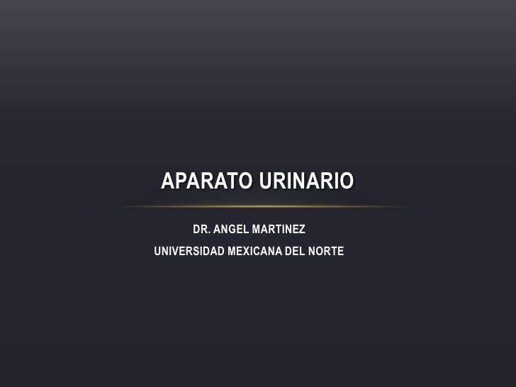 DR. ANGEL MARTINEZ<br />UNIVERSIDAD MEXICANA DEL NORTE<br />Aparato Urinario<br />