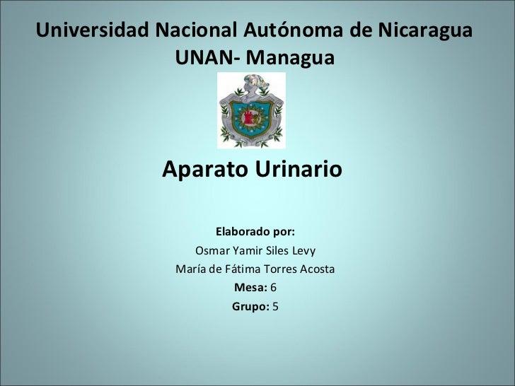 Universidad Nacional Autónoma de Nicaragua             UNAN- Managua            Aparato Urinario                    Elabor...