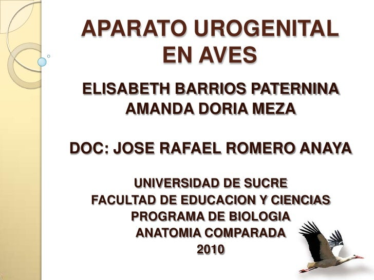 APARATO UROGENITAL EN AVES<br />ELISABETH BARRIOS PATERNINA<br />AMANDA DORIA MEZA<br />DOC: JOSE RAFAEL ROMERO ANAYA<br /...