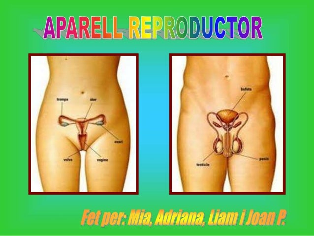 Aparell reproductor