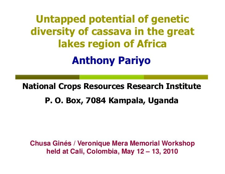 Untapped potential of genetic   diversity of cassava in the great        lakes region of Africa             Anthony Pariyo...