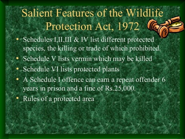 essay on wildlife protection act Free essay: they are responsible for cleaning the air most living creatures breath , they  the endangered species act and the wildlife conservation society.