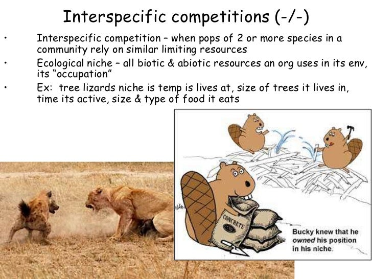 Image Gallery interspecific competition