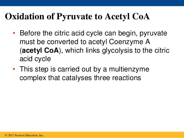 Citric Acid Cycle Net Input And Output The Citric Acid Cycle Can