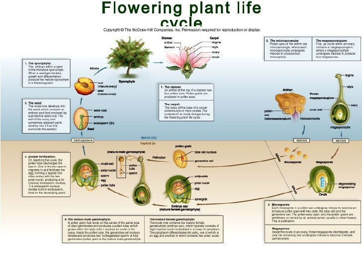 Ap bio lecture ch24 evolution and diversity of life