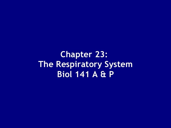 Chapter 23:  The Respiratory System  Biol 141 A & P