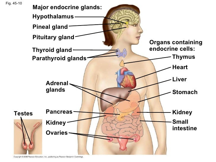 endocrine organ and hormones study guide Page 1 anatomy and physiology study guide for in other parts of the body the hormones the endocrine system produces help endocrine glands and hormones.