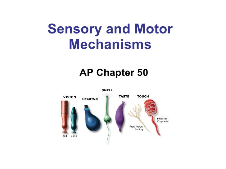 Sensory and Motor Mechanisms AP Chapter 50