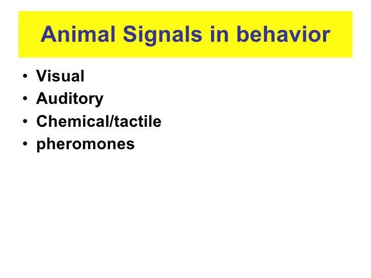 ap biology animal behavior essay Page 1 of 3 ap biology essay questions by year &amp topic revised curriculum 2017 experimental design/animal behavior ecology/data interpretation.