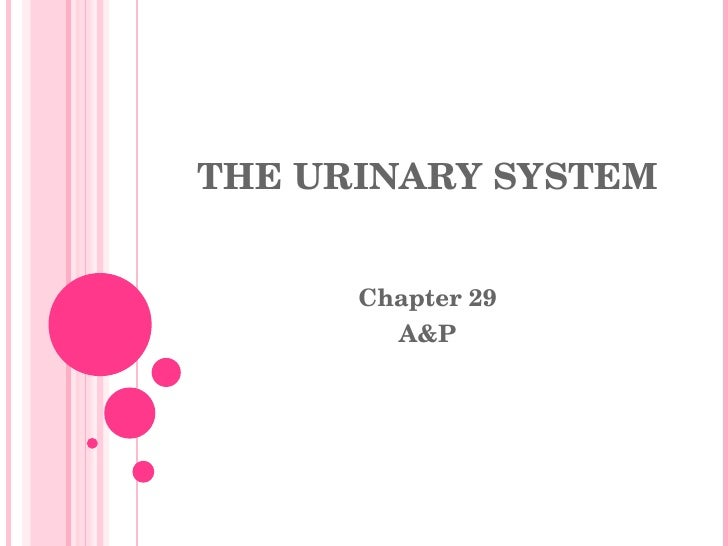 THE URINARY SYSTEM Chapter 29 A&P
