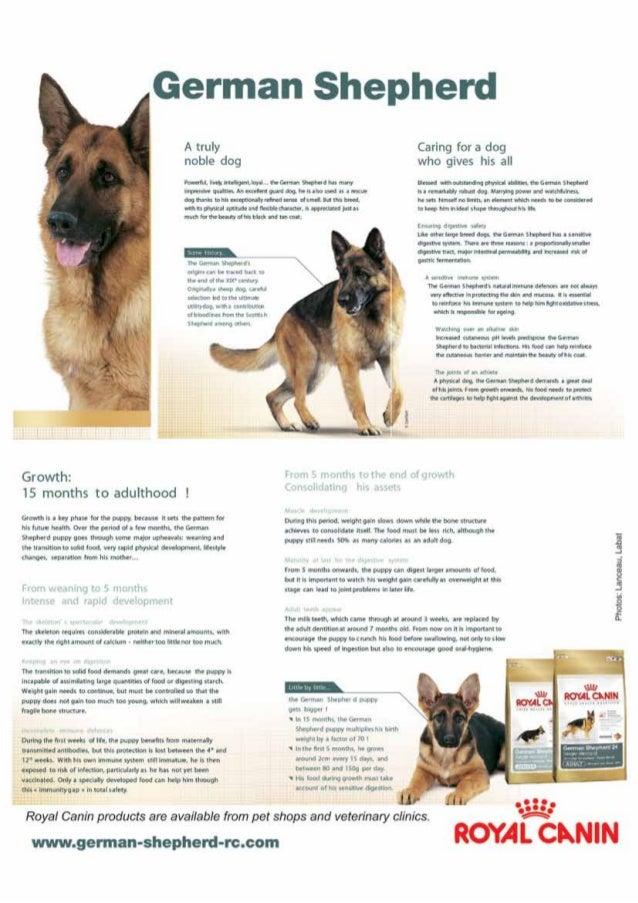 Essay on my pet dog in kannada