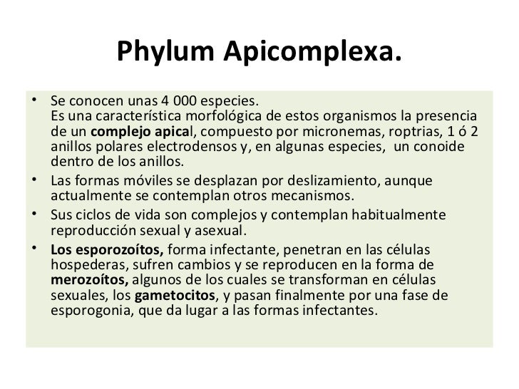 Apicomplexa (I parcial)