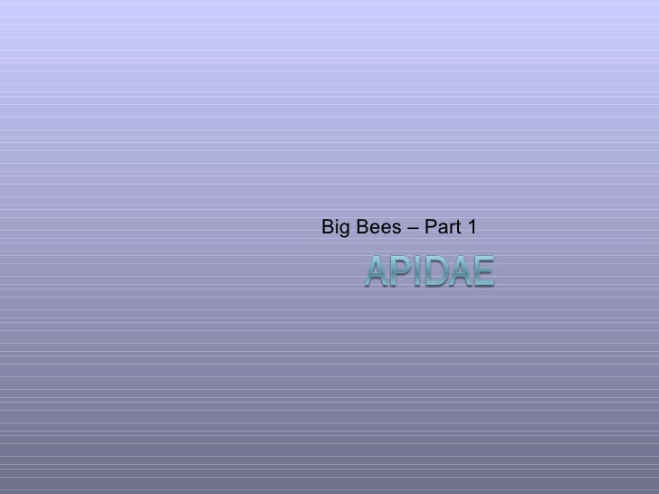 Big Bees – Part 1