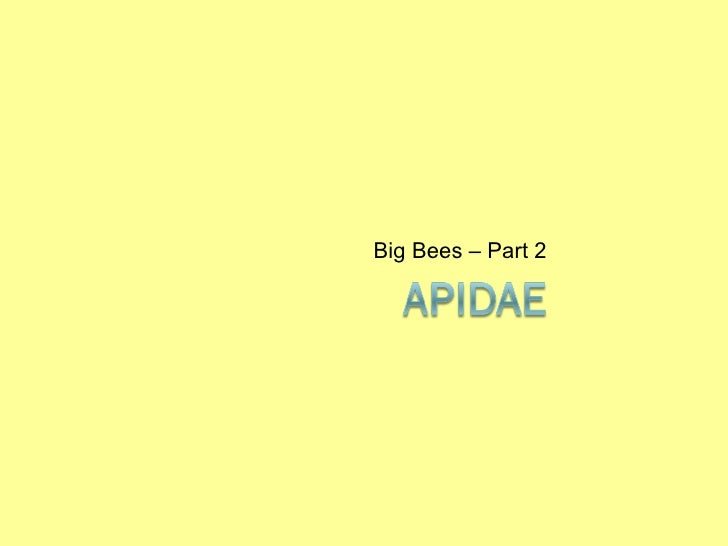 Guide to the Bee Genera within Apidae of Eastern North America, Part 2