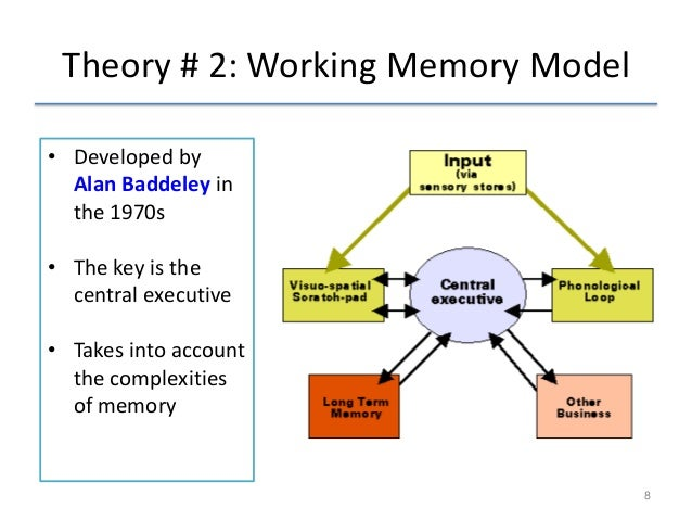 compare and contrast working memory and multi store model Memory models revision the old curriculum levels of  the part of baddeley & hitchs working memory model responsible for the control and regulation of.