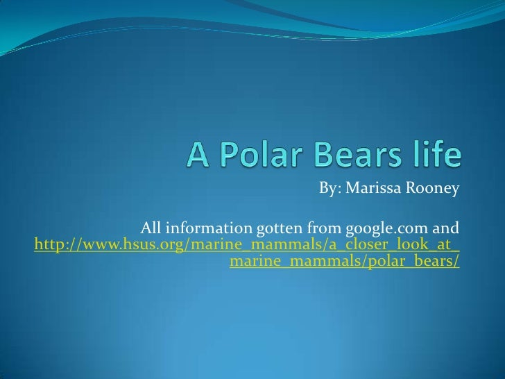 A Polar Bears life <br />By: Marissa Rooney<br />All information gotten from google.com and http://www.hsus.org/marine_mam...