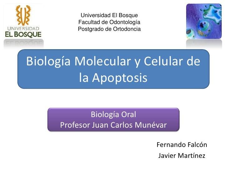 Universidad El Bosque           Facultad de Odontología           Postgrado de Ortodoncia     Biología Molecular y Celular...