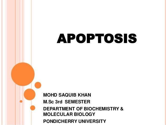 APOPTOSIS  MOHD SAQUIB KHAN M.Sc 3rd SEMESTER DEPARTMENT OF BIOCHEMISTRY & MOLECULAR BIOLOGY PONDICHERRY UNIVERSITY