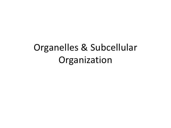 Organelles & Subcellular Organization<br />
