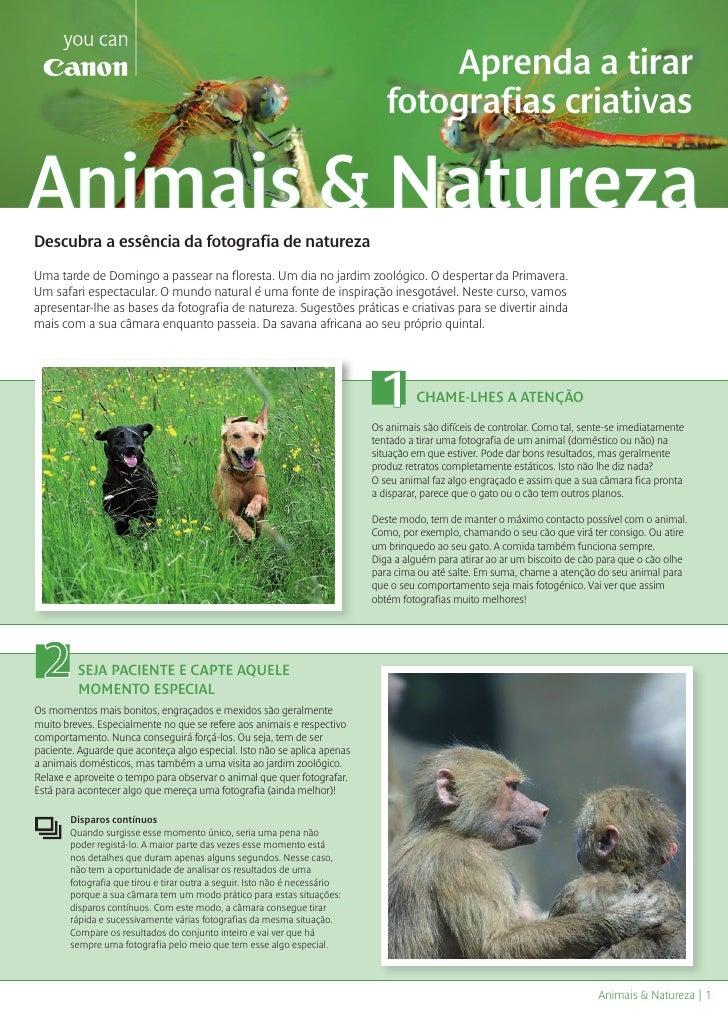 Animais e natureza