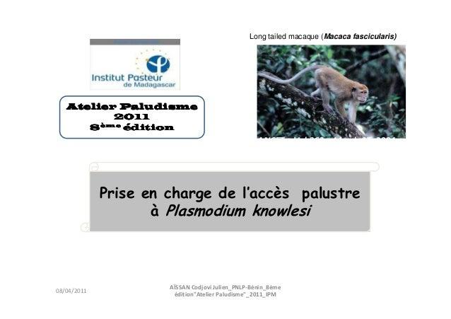 Prise en charge de l'accès palustreà Plasmodium knowlesiLong tailed macaque (Macaca fascicularis)THE LANCET • Vol 363 • Ma...