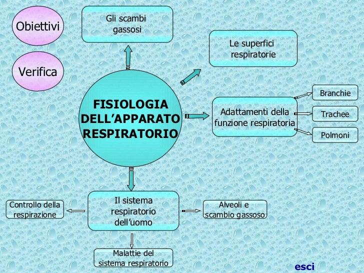 Controllo della respirazione Adattamenti della funzione respiratoria FISIOLOGIA DELL'APPARATO RESPIRATORIO Trachee Polmoni...