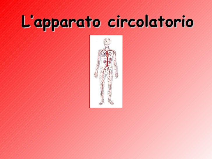 L'apparato   circolatorio