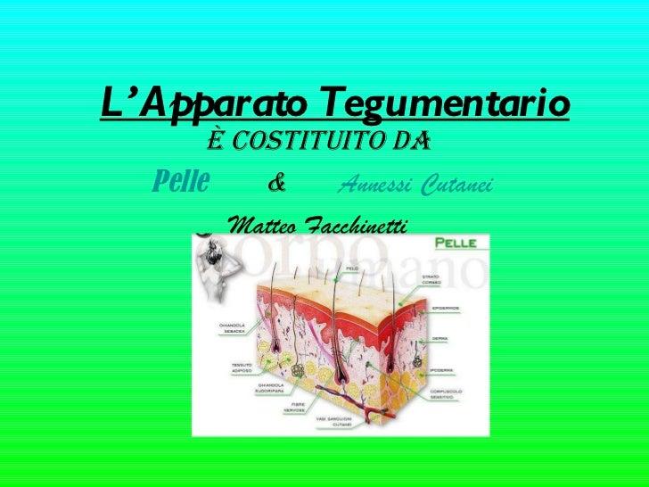 L'Apparato Tegumentario È costituito da  Pelle       &  Annessi Cutanei Matteo Facchinetti