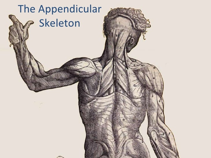 The Appendicular Skeleton<br />