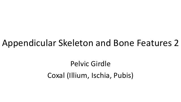 Appendicular skeleton and bone features 2