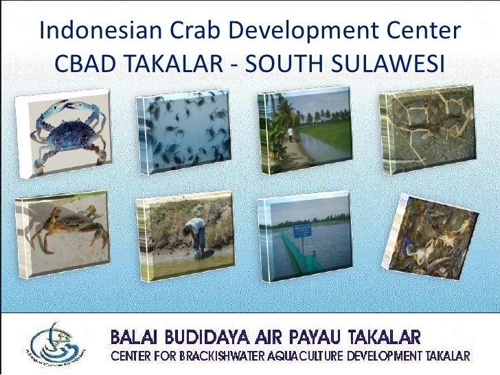 Indonesian Crab Development Center   CBAD TAKALAR - SOUTH SULAWESI