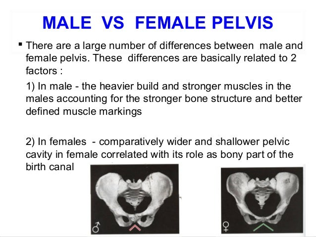Male and female anatomy differences