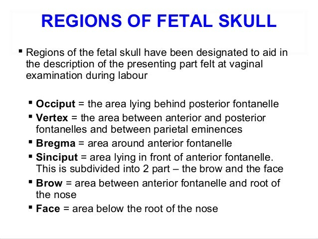 Fetal Skull Ppt Regions of Fetal Skull