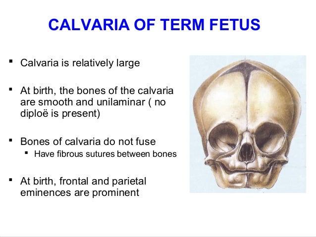 Fetal Skull Development of a Term Fetal Skull 1