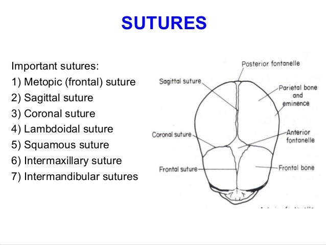 What is a suture in anatomy