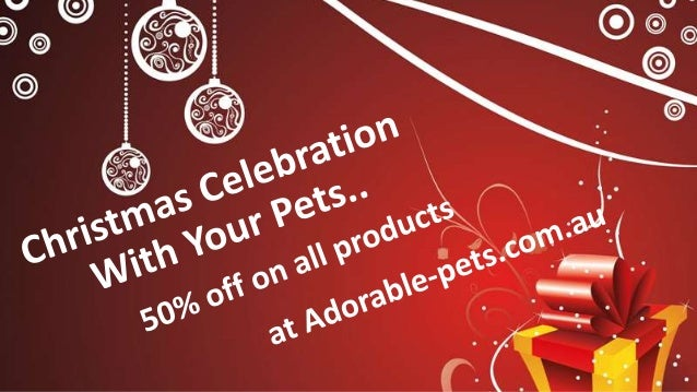 Christmas Celebration With Your Pets