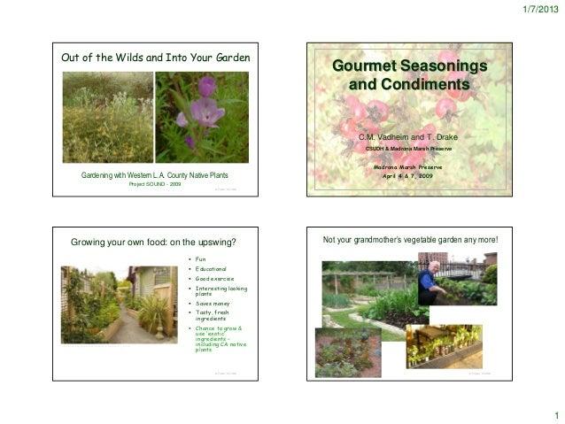 Native Seasoning Plants - notes