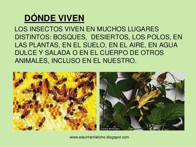 Aprendemos de insectos - Donde viven los acaros ...