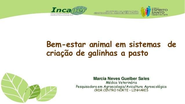 Bem-estar animal em sistemas de criação de galinhas a pasto Marcia Neves Guelber Sales  Médica Veterinária Pesquisadora em...