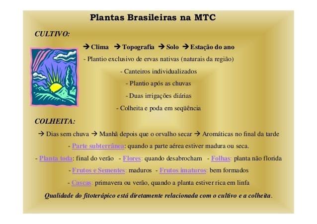Plantas Brasileiras na MTC CULTIVO: Clima Topografia Solo Estação do ano - Plantio exclusivo de ervas nativas (naturais da...