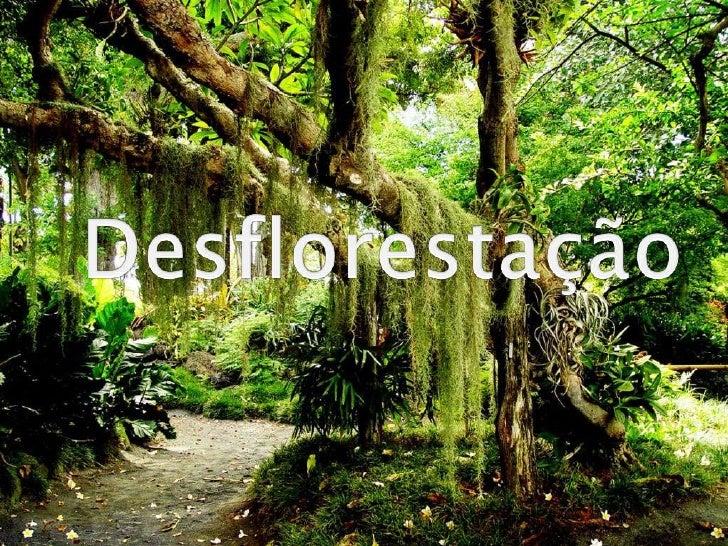 Desflorestação<br />