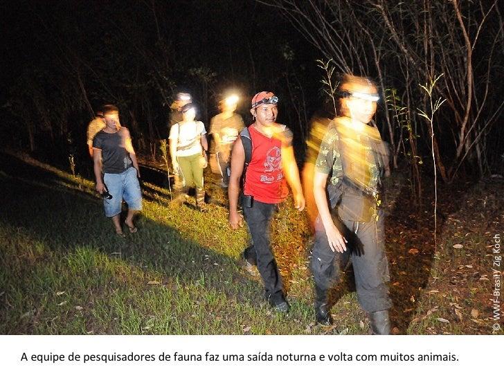 © WWF-Brasil / Zig Koch A equipe de pesquisadores de fauna faz uma saída noturna e volta com muitos animais.