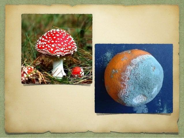 São seres aeróbios ou anaeróbios facultativos; Parede celular - quitina; Acumulam glicogênio como reserva energética; Estã...