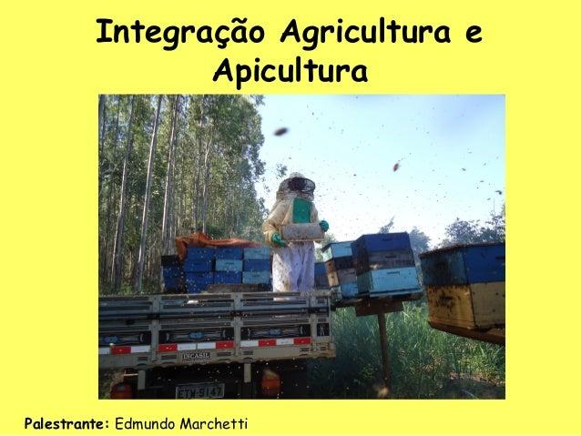 Apresentação Edmundo Marchetti